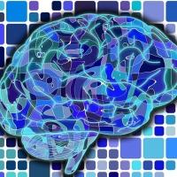 Mózg w służbie naszej efektywności